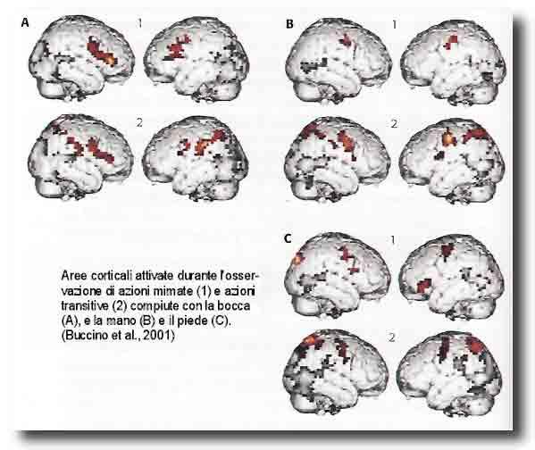 I Neuroni Specchio Parte Prima Scienza E Psicoanalisi