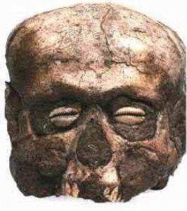 cranio netufiano