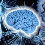 cervello enterico
